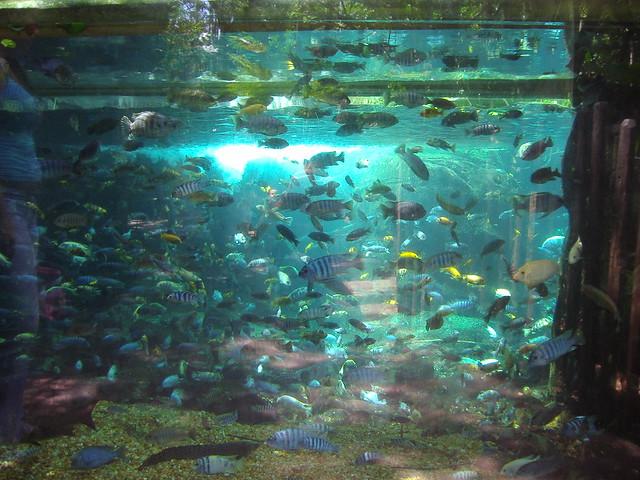 Fish tank games temperature temperature betta fish for Betta fish water temp