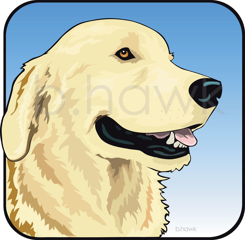 golden retriever illustration done in illustrator animal