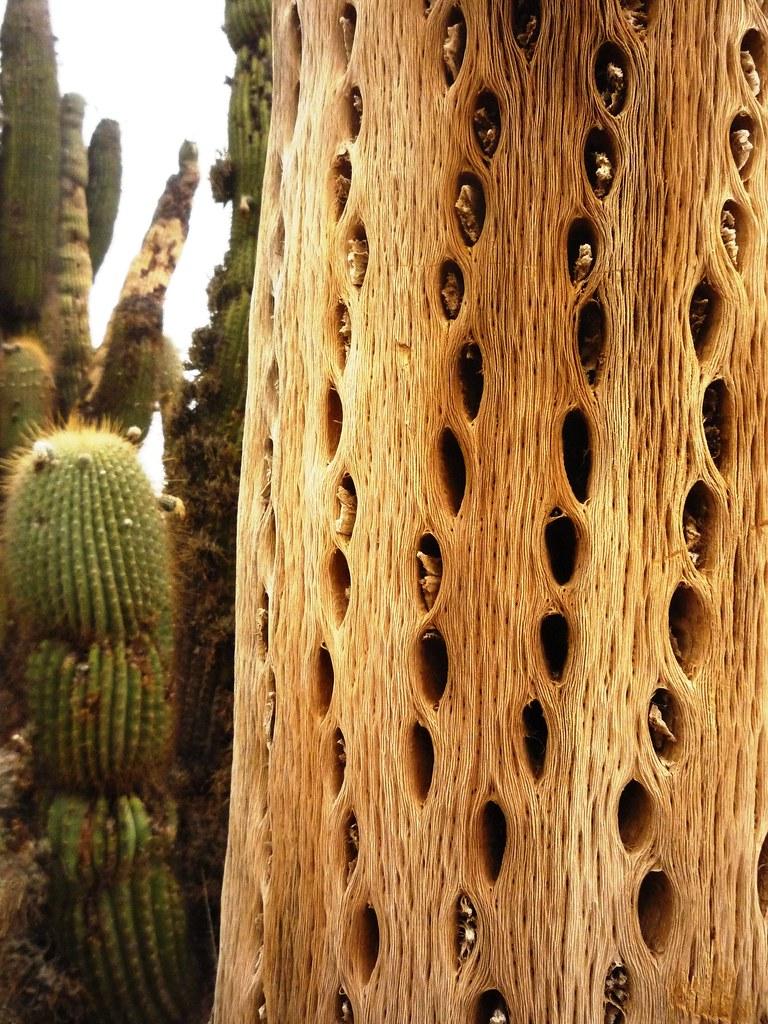 A Textura Do Cardon Cactus Seco Lets Flickr - Cactus-seco