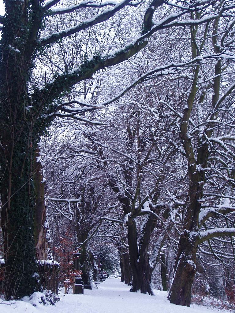 winter in Sheffield General Cemetery – main walk