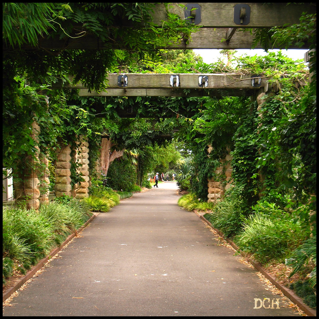 Covered Walkway Designs For Homes: A Vine Covered Walkway Through
