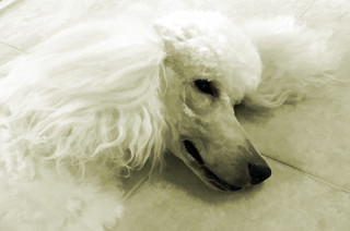 12/52:  Idiom:  Sick As A Dog. . . . Keep Your Ear To The Ground. . .   Let Sleeping Dogs Lie | by Louise Lindsay