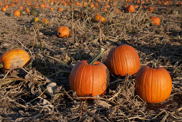 Vala S Pumpkin Patch Food Prices