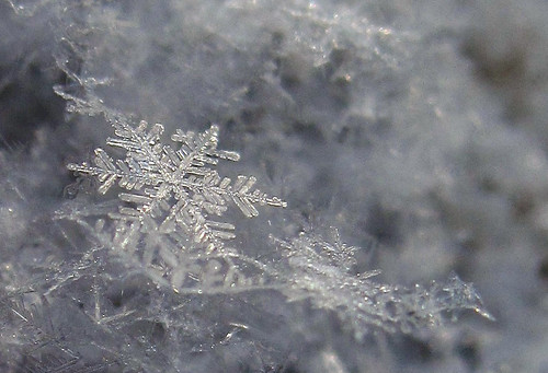 Snowflakes Again | by CaptPiper
