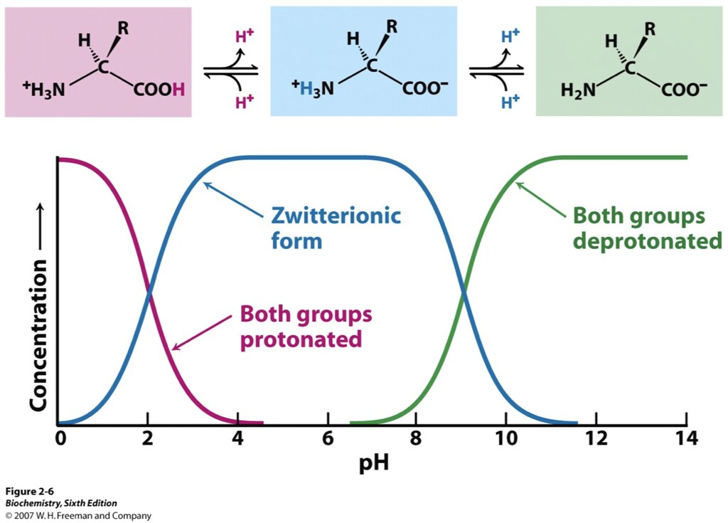 Zwitterion | Flickr - Photo Sharing!