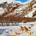 Huskies, snow and mountains