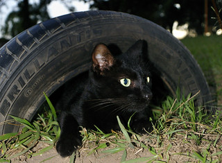 Tyred Cat | by Chris Bloom