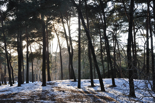 Enkele zonnestralen in het winterbos - Some sunrays in the winter forest | by RuudMorijn