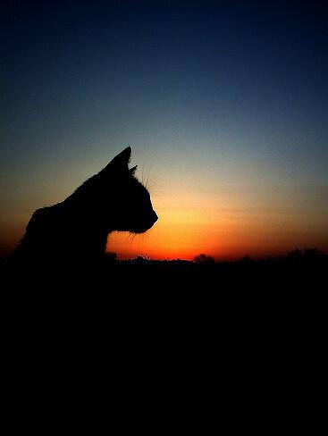 cat sunset | Michi, reedición | annahndz | Flickr