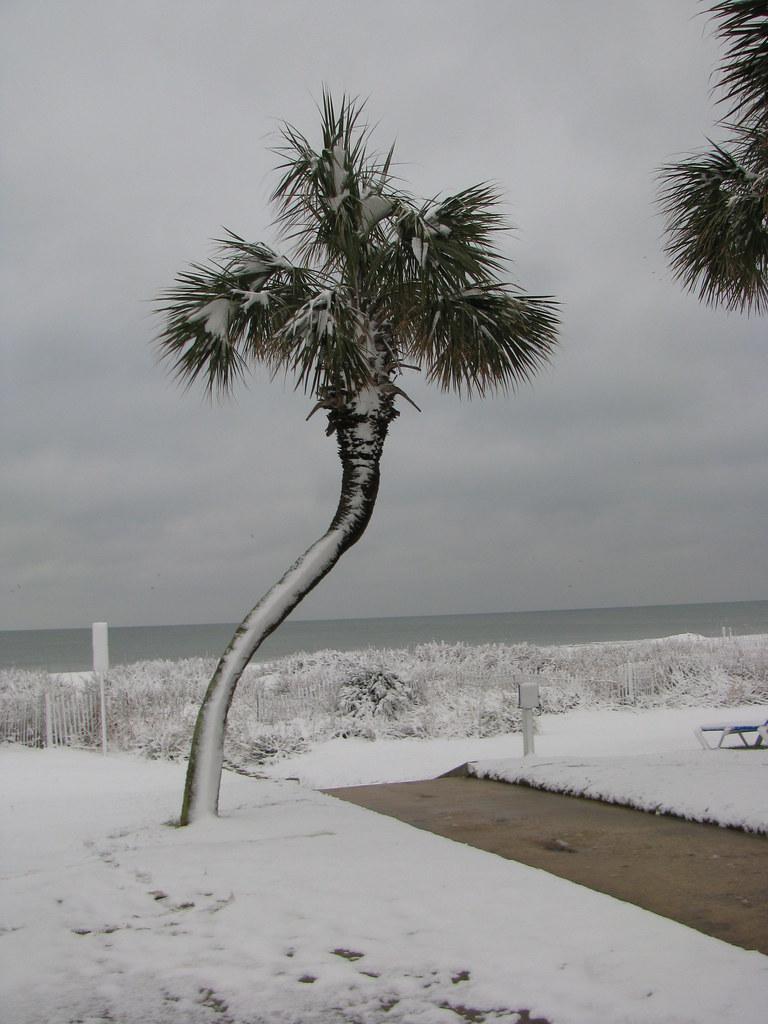 Snow Covered Palm Beach