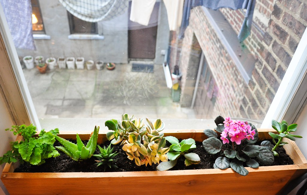 indoor window box   stacy longenecker   Flickr