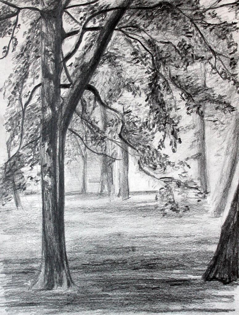 Dessin d 39 arbres du jardin du luxembourg au crayon laure for Arbres jardin du luxembourg