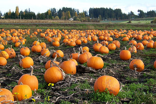 Pumpkin Patch 100_9296 | by Kam's World