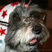 Michi, il cane con occhiali/ Michi, the dog with eyeglasses