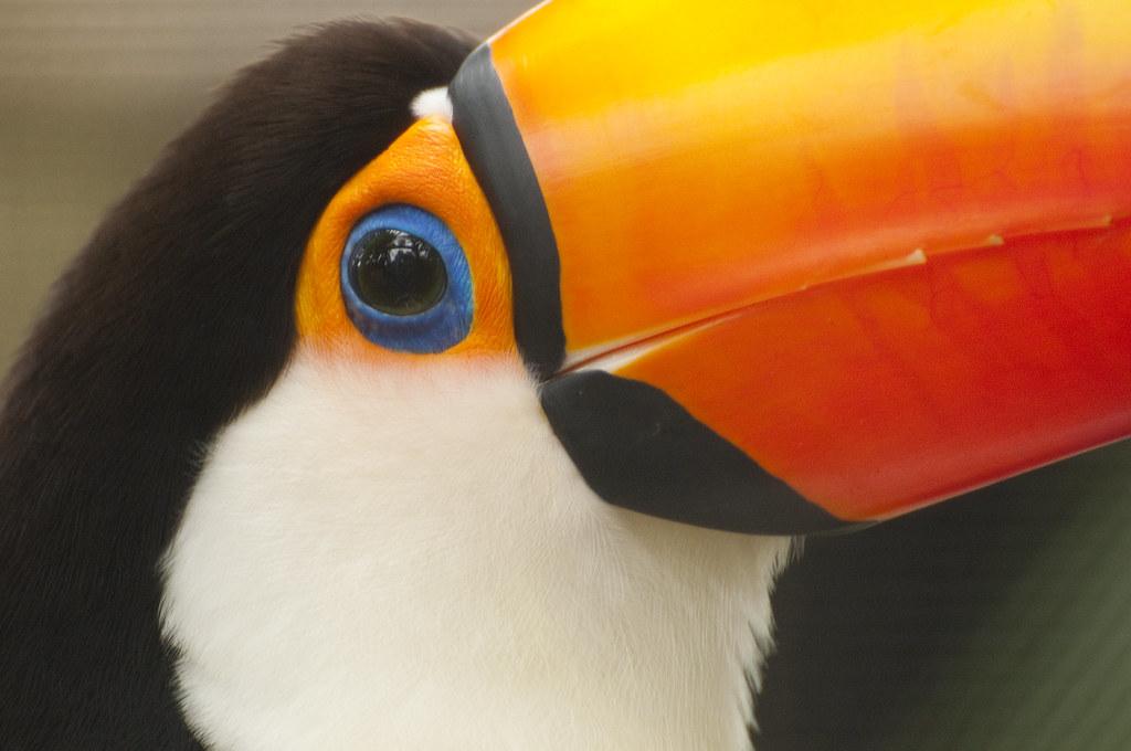 book five minute veterinary consult avian 2016