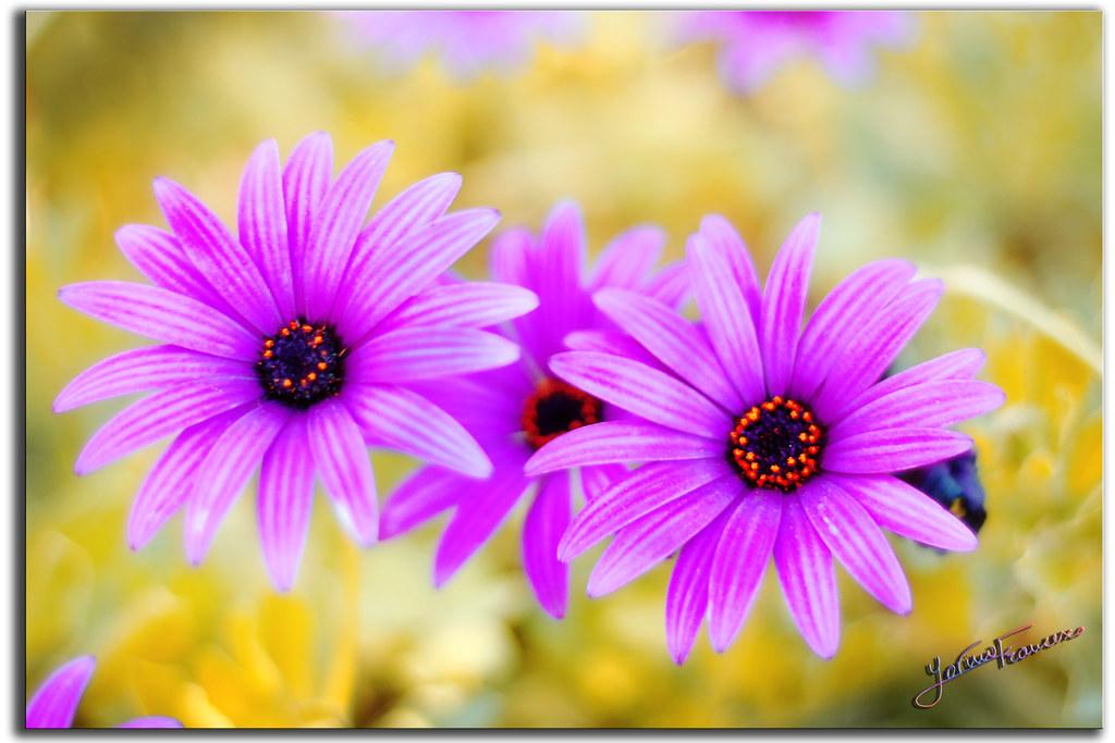 Fiori di campo ancora please no invitations and no - Immagini di fiori tedeschi ...