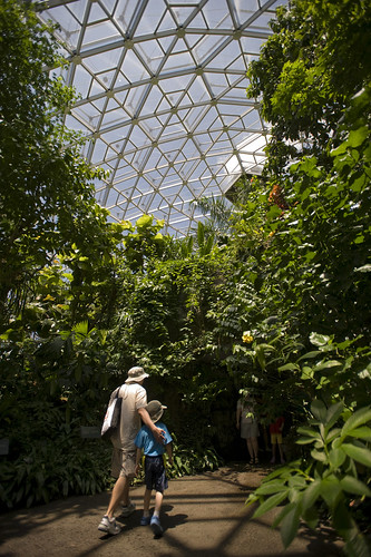 Climatron Interior | by Missouri Botanical Garden