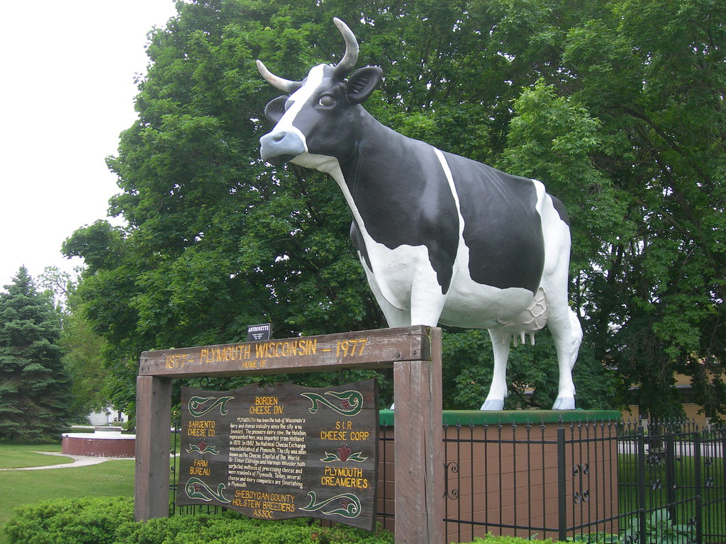 Antoinette The Holstein Plymouth Wisconsin Jimmy