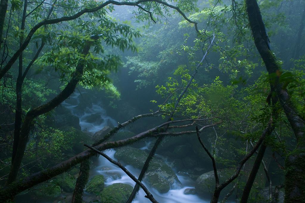Peaking through, Yakushima Island