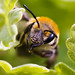 Bees Have Weird Mouthparts