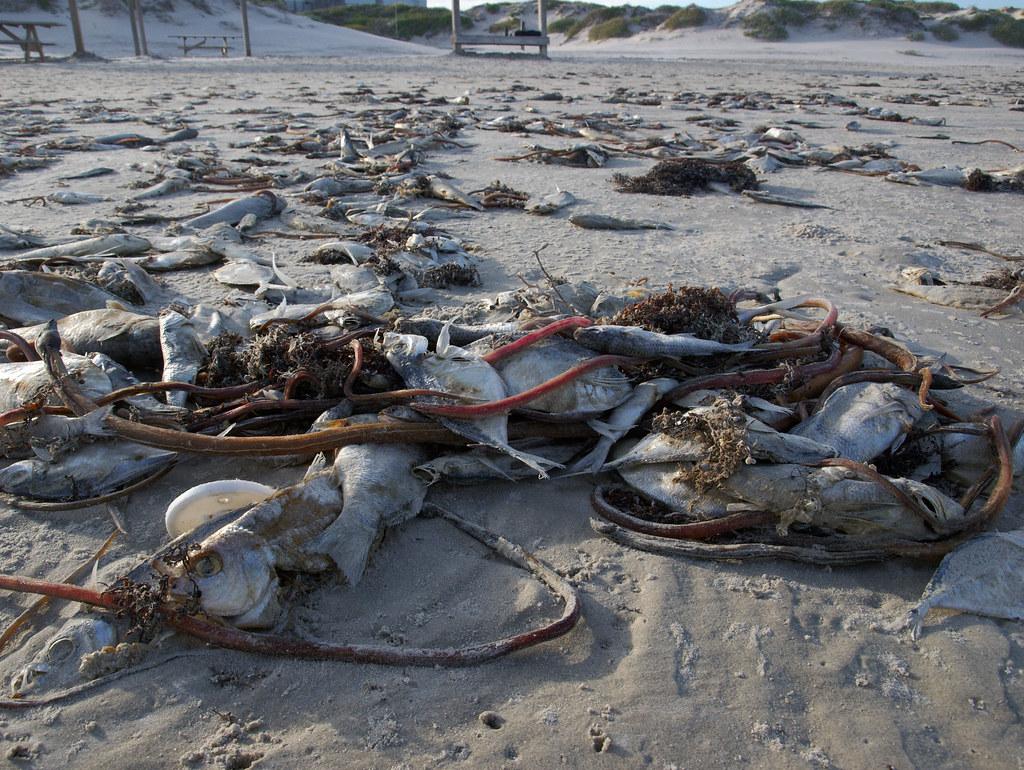 Dead Island Bloom Deaktivieren