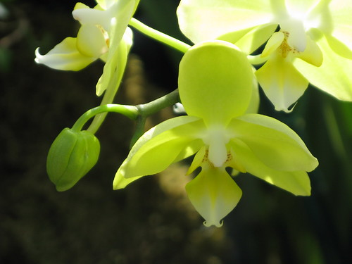 Orchid Show 2010 | by archymommy