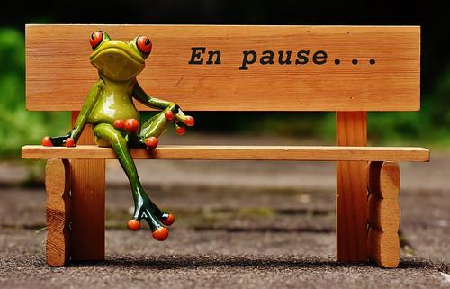 frog-en-pause
