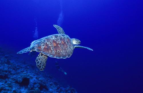 Seychelles World Travel Guide