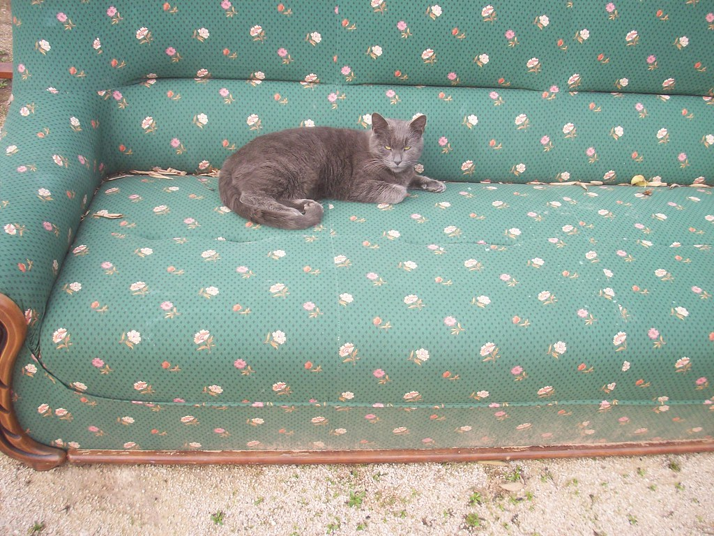 monsieur le chat demmas trne sur son beau canap la seyne sur - Emmaus Canape