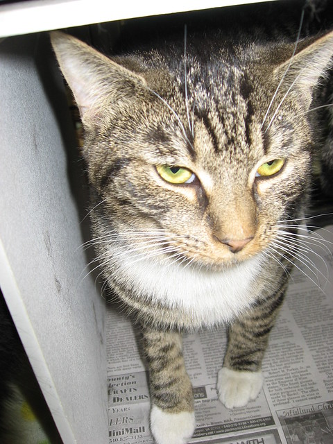 Meet Adoption Cat Problem Spraying In Home
