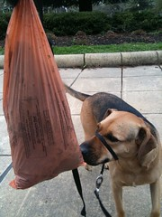 That's about 6 pounds(!) of dog poo from 90 degrees of the Grant Circle | by Wayan Vota