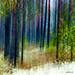 Reindeer moss forest