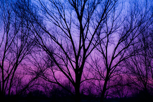 A Violet Sunset | by Moon_0903