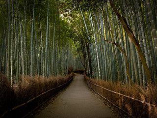 the path of bamboo, revisited #7 (near Tenryuu-ji temple, Kyoto) | by Marser