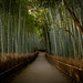 the path of bamboo, revisited #7 (near Tenryuu-ji temple, Kyoto)