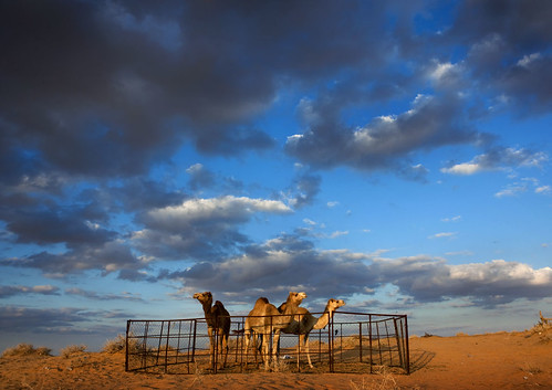 Saudi Arabia - Sunset, desert, and camels | by Eric Lafforgue