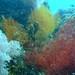 Corals at Maripipi