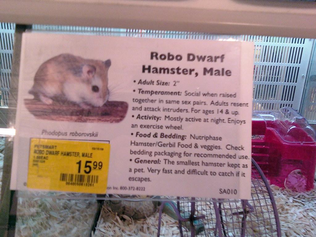 Robo Hamster Petsmart Robo Dwarf Hamster Male at