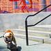 Skateboarding_dog_anaheim_oc