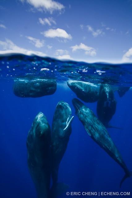 Sperm whale social group split image split image of a for Splity 3 en 1