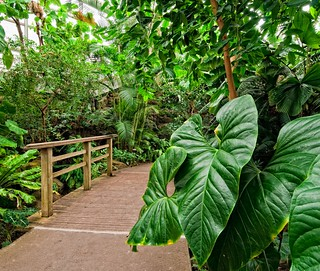 Tropical Pavilion | by Brooklyn Botanic Garden