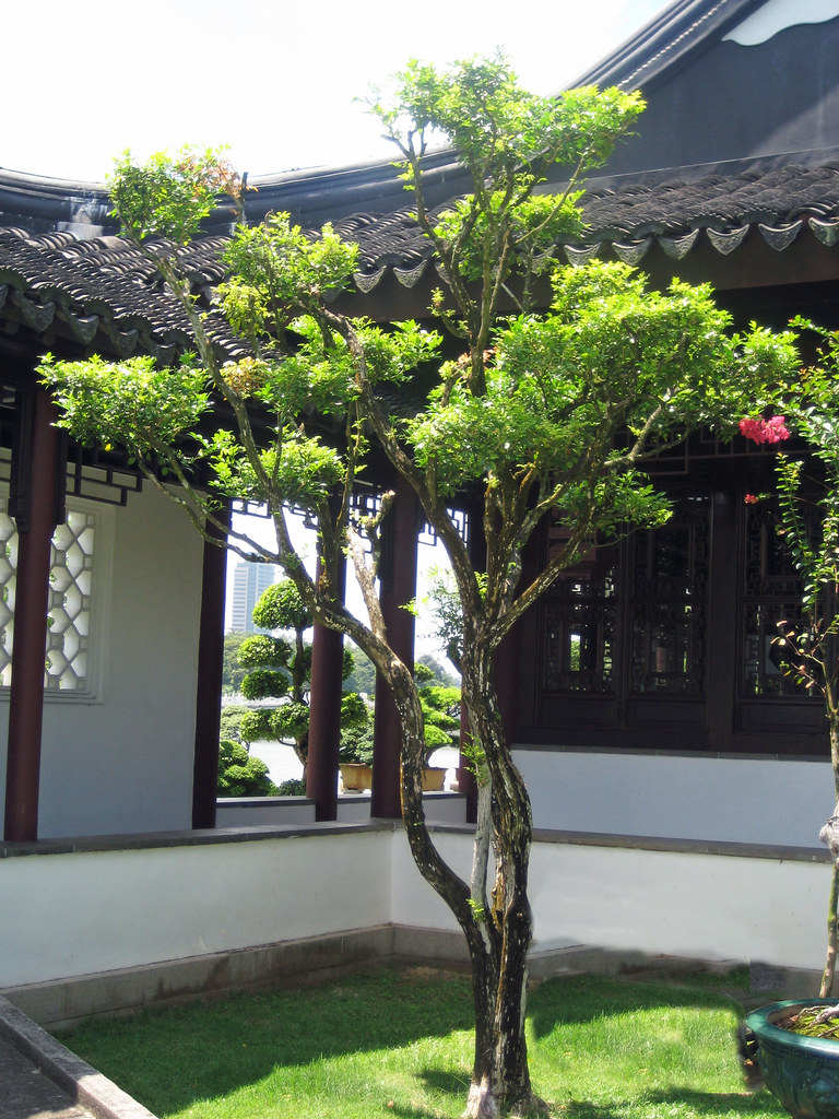 Small Courtyard Tree In Singapore Chinese Garden