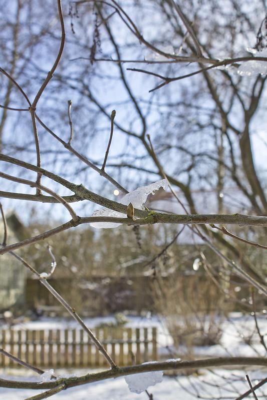 Ett litet livstecken i vinterns kalla trädgård
