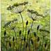 Seedpods 6, Garden Silhouette