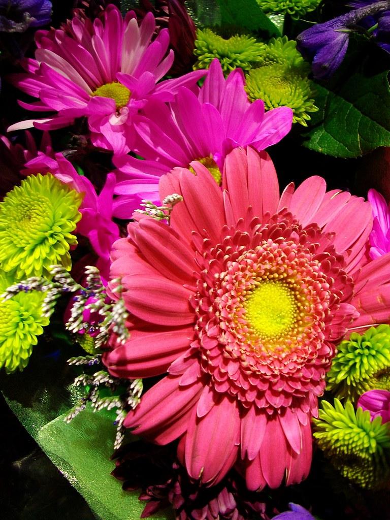 Nice Pink Flowers F L A M I N G O Flickr
