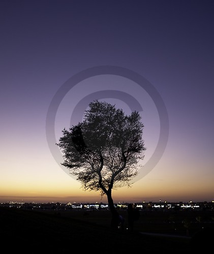 Tree at Dusk | by rahsoft