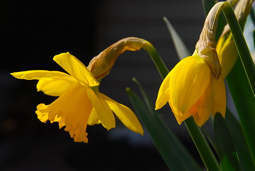 Ναρκισσος! <<Narcissus>> | by ineedathis, Everyday I get up, it's a great day!