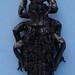 Apotomopterus maacki aquatilis
