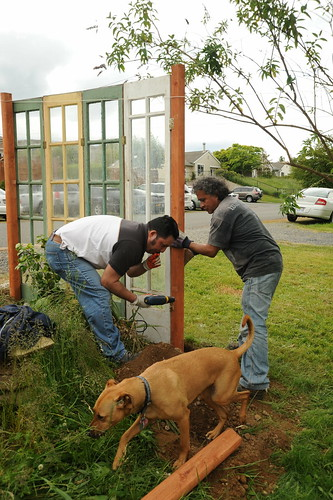 Building the funky part of a fence, reusing glass doors from a greenhouse, Jose and Tito, with Rosie helping in foreground, Broadview duplex, Seattle, Washington, USA | by Wonderlane