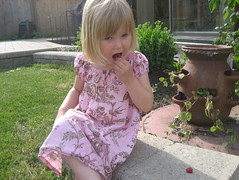 4-year-old Hannah eating raspberries | by AmberStrocel